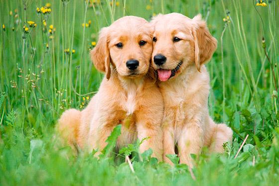 dog-stock-images.jpg